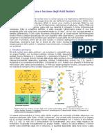 dispensestrutturaacidinucleici.pdf
