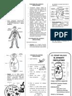 aparato circulatori.docx