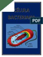celula bacteriana