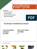 bryophyta