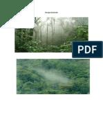 Bosque humedo.docx