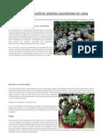 Manual Para Cultivar Plantas Suculentas en Casa