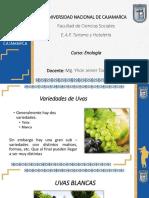 TIPOS DE UVAS.pdf
