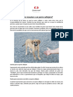 Cómo Rescatar Perros Callejeros
