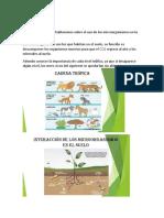 Microorganismos en La Agricultura