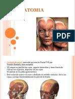 Anatomia Musculos masticadores y faciales