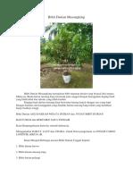 TERPERCAYA.0813-2711-9234, Bibit Durian Musang King, Bibit Durian Musang King Kaki 3,