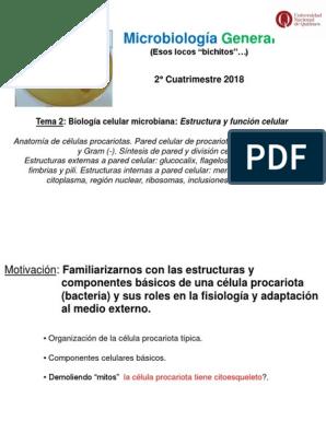 2 Estructura Y Funcion De La Celula Procariota 2018 1