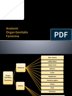 Anatomi sistem repro.pptx