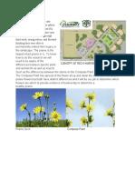 prairie project
