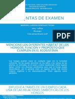 Preguntas de Examen - 2015-118037