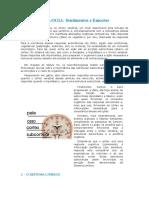 Apostila de Neurofisio.doc