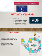 mitosis celular