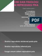 Anatomi Dan Fisiologi Sistem Reproduksi Pria