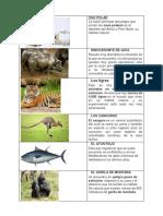 ANIMALES EN EXTINCION.docx