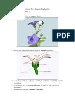 Floarea Material