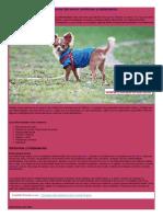 Las enfermedades más comunes del perro