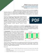 Anestesicos_locales.docx