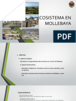 Ecosistema en Mollebaya Expo