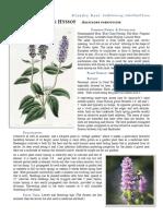 Anise Hyssop Agastache Foeniculum materia medica herbs