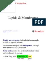 2-lipid