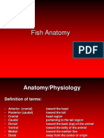 lecture 4 anatomy review for fish disease (1).ppt