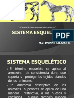 Sistema Esqueletico- AnatomÃa1