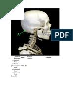 Fundamentals of Medicine 2009 Spotter
