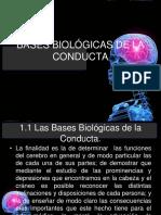 104923539 Bases Biologicas de La Conducta (1)