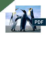 pinguin 3.docx