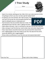 Seasonal Tree Study