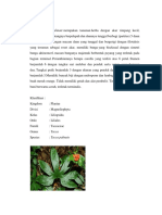 Famili Taccaceae