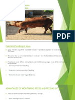 Feed and Feeding of Sows m