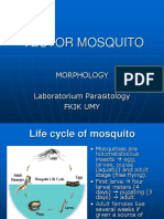 Praktikum Entomologi Nyamuk Vektor Summer School