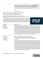 MAIZ PGPR PROTUGUES.pdf