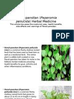 Pansit-pansitan (Peperomia Pellucida) Herbal Medicine