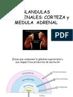 2018 Ct2 Corteza y Medula Adrenal