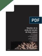 Bonsaipasión-Detalhes da poda de bonsais de hoja caduca.doc