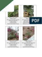 Plantas Vegetales de la Guajira