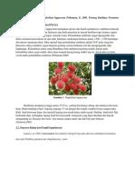 Tinjauan Umum Botani Nephelium Lappaceum Prihatman