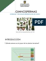 3._Gimnospermas