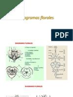 diagramas florales