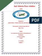 REPORTE VII ANATOMIA MELISA.docx