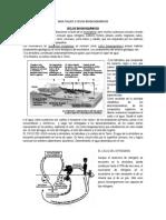 guia-taller-2-ciclos-biogeoquimicos (2).docx