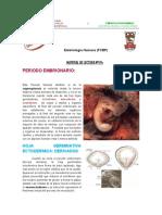 PERIODO_EMBRIONARIO.pdf