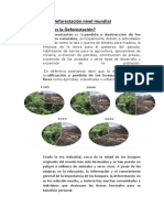 Deforestación nivel mundial