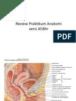 39320_Review Praktikum Anatomi