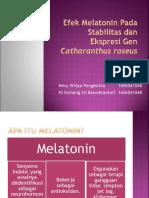 Efek Melatonin Pada Stabilitas Dan Ekspresi Gen Catharanthus