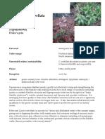 Chimaphila Pipsissewa materia medica herbs