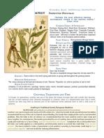 Comfrey Symphytum Officinale materia medica herbs